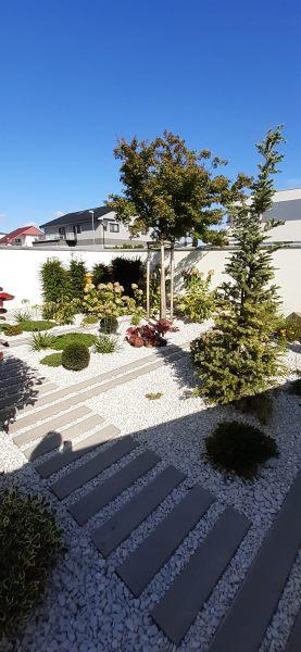 Strkova-zahrada-Acer-palmatum